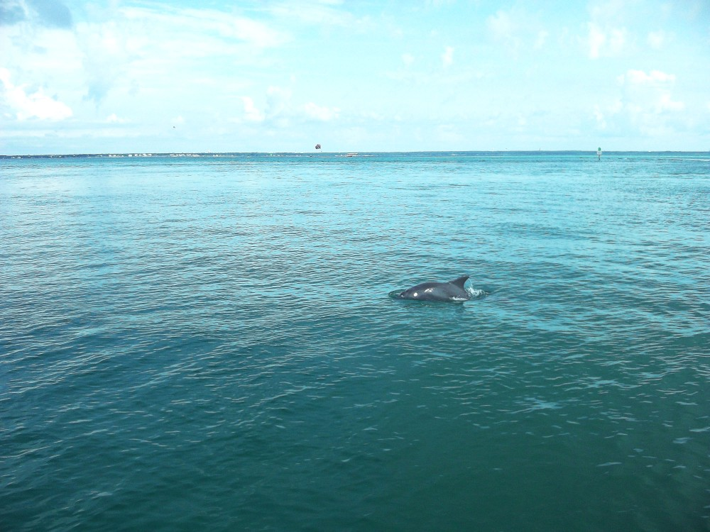 Image of a dolphin's fin swimming in the middle of the ocean.